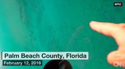 沖合に数千匹のサメの大群、警戒呼びかけ 米フロリダ州
