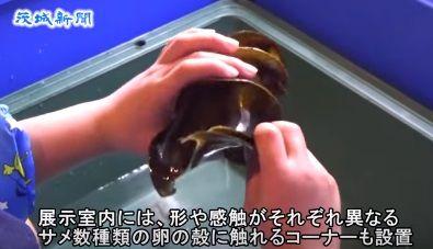 茨城新聞 アクアワールド県大洗水族館