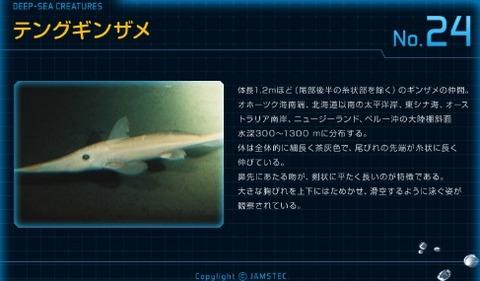 24テングギンザメ