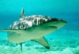 サメ イメージ