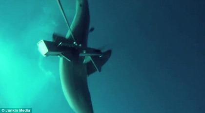 ホホジロザメ 突進
