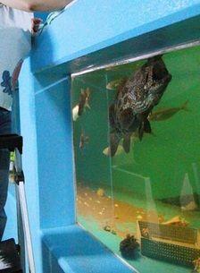 おきのはた水族館