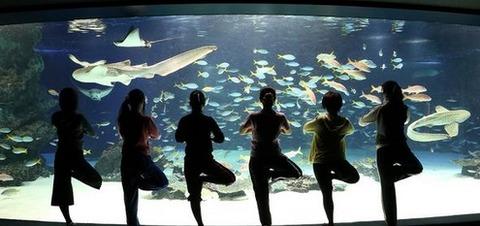 サンシャイン水族館 ヨガ