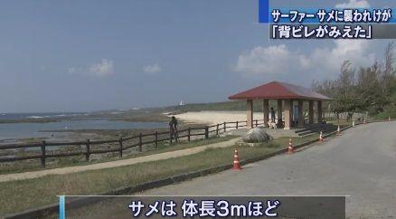 沖縄 サメ5