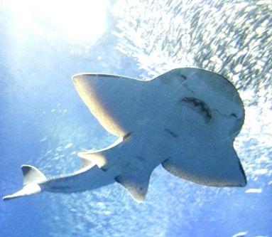 大洗 サメ ハロウィーン1