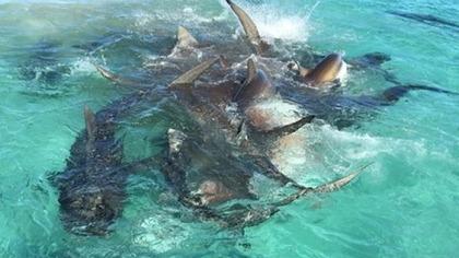 サメ WA