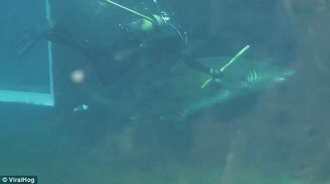 2012年、南アフリカのダーバンにある水族館