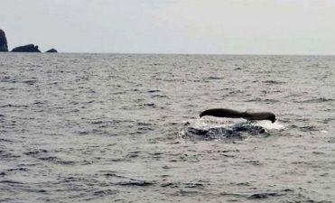 2015今季初クジラ