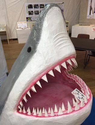 海の博物館Sea-Folk Museum サメ展