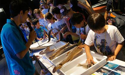 Sony Aquarium