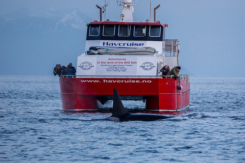 SHIP NOISES SEVERELY IMPACT KILLER WHALE POPULATIONS