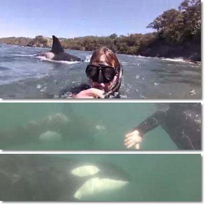 ニュージーランド シャチ4
