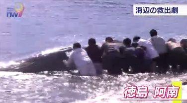 クジラ 救出