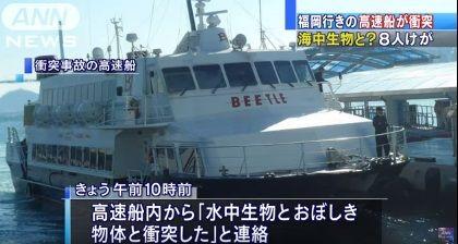 福岡行きの高速船と海中生物