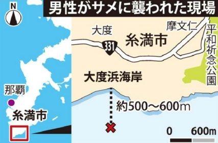 沖縄 サメ7