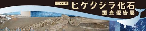 全長およそ9メートルのヒゲクジラ化石展示