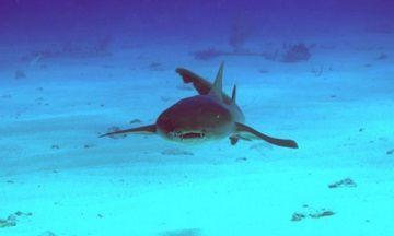 ドローンでサメ監視