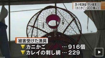 北海道 サメ