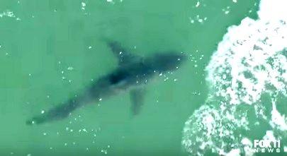 サメ サンセットビーチ1