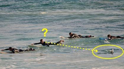 サメ パドリング2