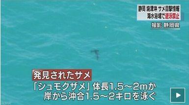 シュモクザメ NHK