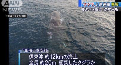 クジラ 衝突