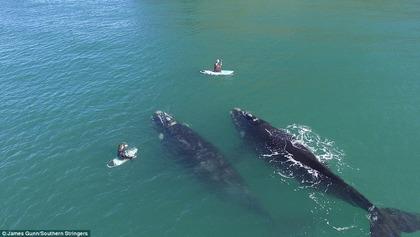ニュージーランド クジラ