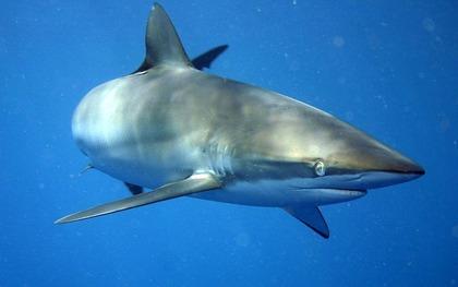 サメ・シャチ好き集まれ情報局 :...