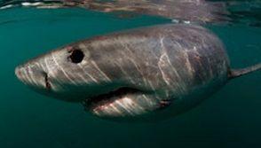 サメ イメージ6