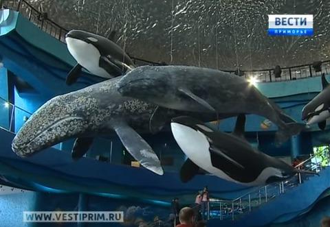 Primorsky Aquarium1