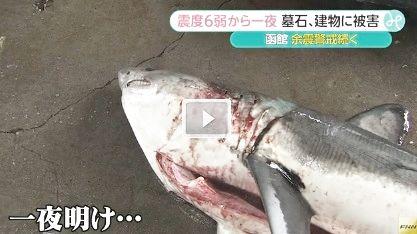 サメ 函館1