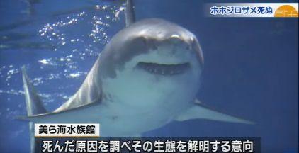 RBC琉球放送 News