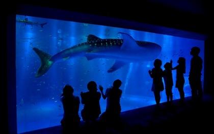 のとじま水族館1