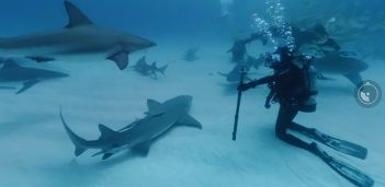 360度サメ