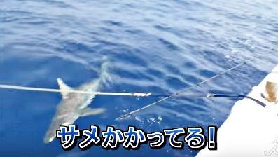 サメ 番組