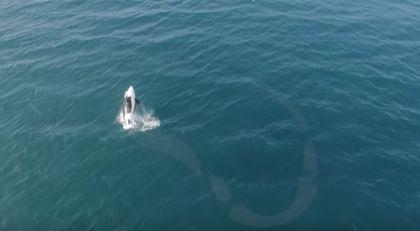 Norway シャチ