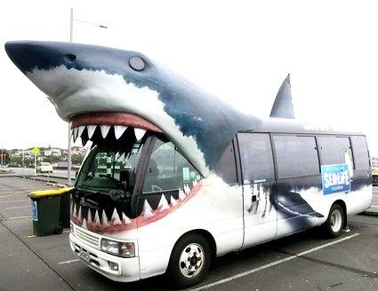 サメ バス3