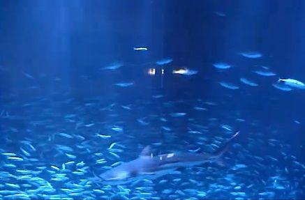 名古屋港水族館 サメ