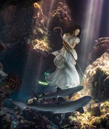 美女 サメ フィジー