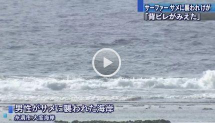 沖縄 サメ4