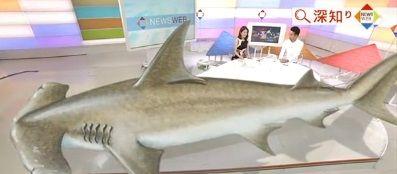 さかなクン サメ動画