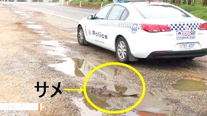 サメ オーストラリア2