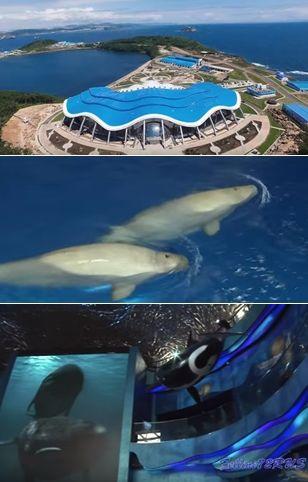ロシアの水族館 延期