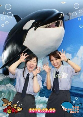 テーマ:特別展 世界が恋する海 座間味村 シャチフレーム1