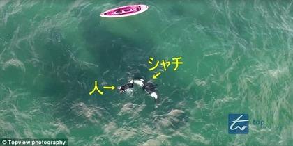 シャチと泳ぐ ニュージーランド1