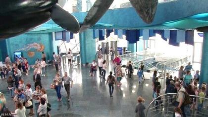 ロシア水族館 NHK