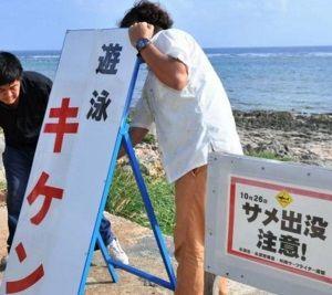 沖縄 サメ6