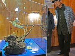 モササウルスと海の生き物の化石展