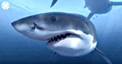 Virtual Shark1