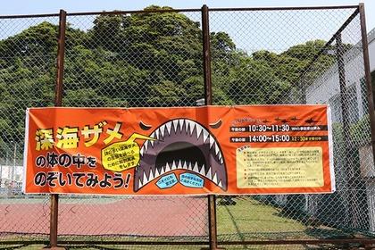 深海ザメの体の中をのぞいてみよう!